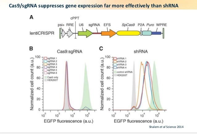 Cas9/sgRNA suppresses gene expression far more effectively than shRNA  Shalem et al Science 2014