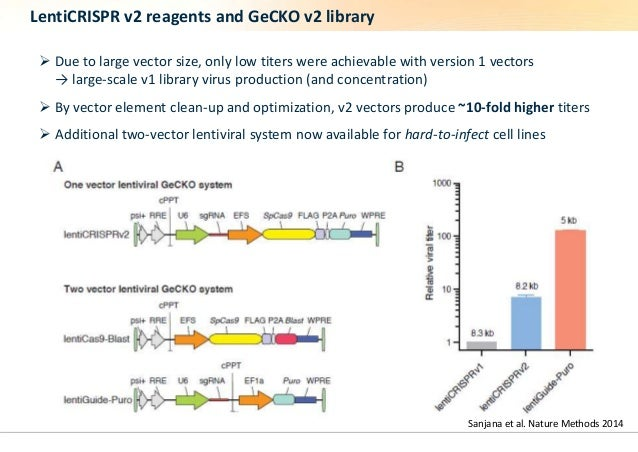 LentiCRISPR v2 reagents and GeCKO v2 library   Due to large vector size, only low titers were achievable with version 1 v...