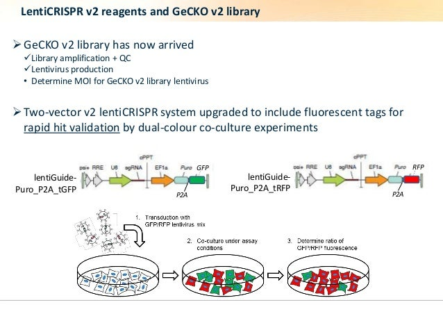 LentiCRISPR v2 reagents and GeCKO v2 library  GeCKO v2 library has now arrived  Library amplification + QC  Lentivirus ...