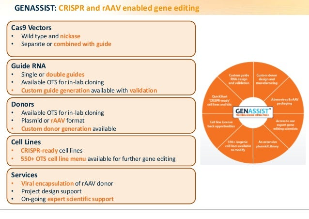 GENASSIST: CRISPR and rAAV enabled gene editing  Cas9 Vectors  • Wild type and nickase  • Separate or combined with guide ...