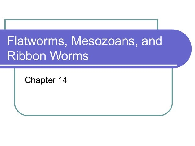 Flatworms, Mesozoans, andRibbon Worms  Chapter 14