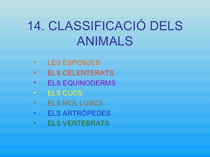 14. CLASSIFICACIÓ DELS ANIMALS <ul><li>LES ESPONJES </li></ul><ul><li>ELS CELENTERATS </li></ul><ul><li>ELS EQUINODERMS </...
