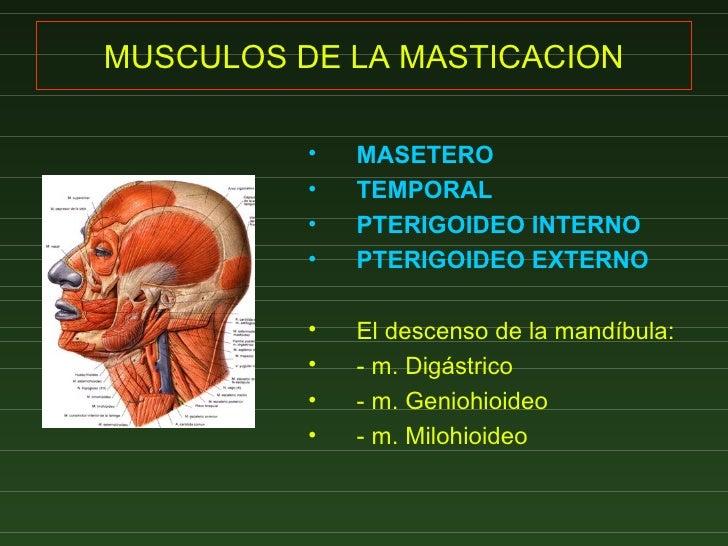 14  Masticacion Y Mimica