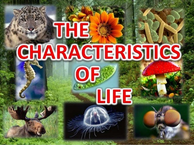 Concepts Explored In This Lesson All Living Things Share These Characteristics 1 They Are
