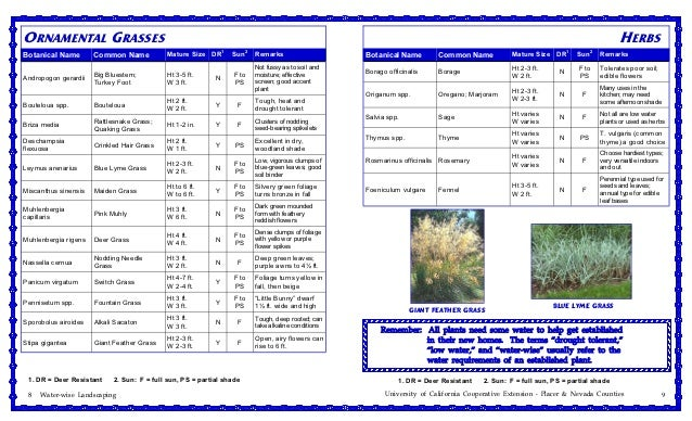 Ornamental Grasses Zone 7 Water efficient plants for the sierra foothills zone 7 nevada coun ornamental grasses herbsbotanical workwithnaturefo