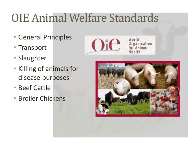 public policy for animal welfare in Reporting and investigating animal welfare concerns policy approved by uga iacuc october 1997 revised august 2014 the university of georgia is committed to the humane care of the animals used in its research and.