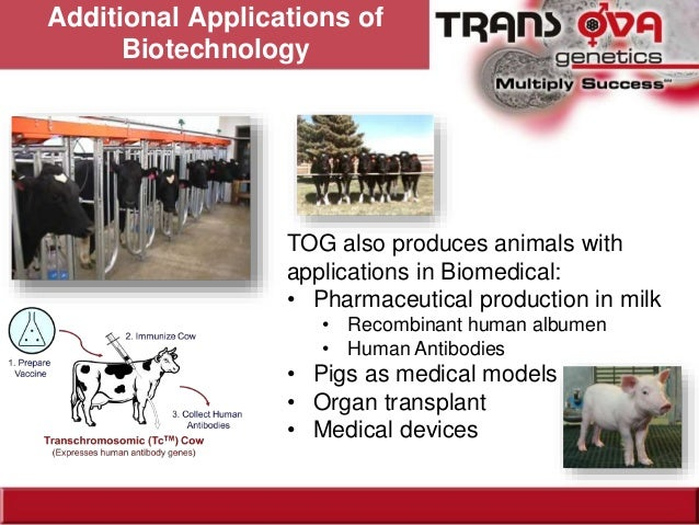 cloning and transplanting cattle embryos the social advantages Cloning could allow breeders to select those cattle that can produce high quality meat or milk and thrive in extreme climates and use them to breed more cattle to be used for food production.