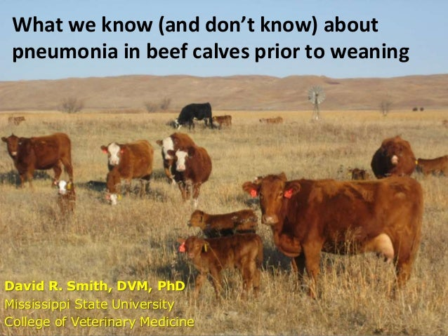 What we know (and don't know) about pneumonia in beef calves prior to weaning David R. Smith, DVM, PhD Mississippi State U...