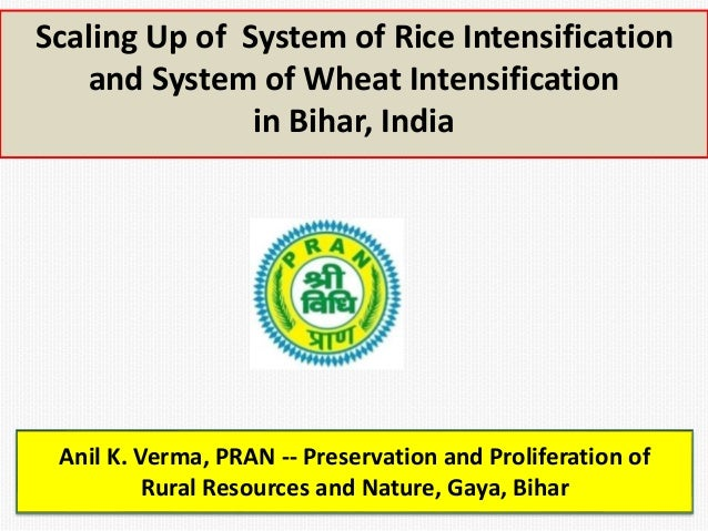 Scaling Up of System of Rice Intensification  and System of Wheat Intensification  in Bihar, India  Anil K. Verma, PRAN --...