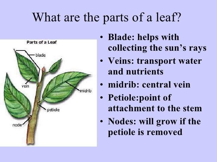 14 1 Plant Anatomy