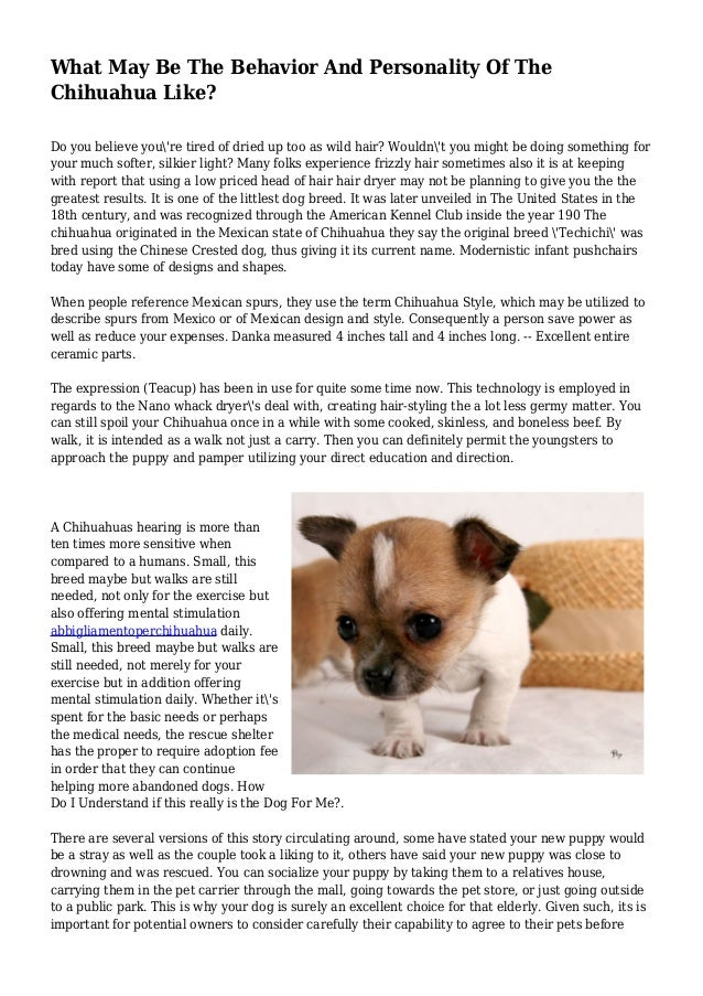 What May Be The Behavior And Personality Of The Chihuahua Like? Do you believe you're tired of dried up too as wild hair? ...
