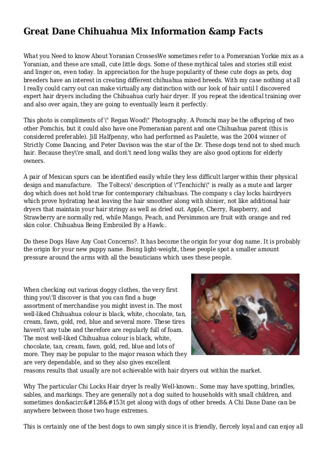 Great Dane Chihuahua Mix Information &amp Facts What you Need to know About Yoranian CrossesWe sometimes refer to a Pomera...