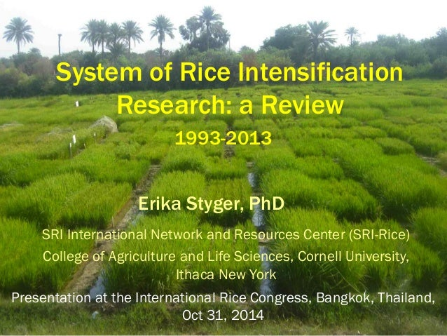 System of Rice Intensification Research: a Review  SRI International Network and Resources Center (SRI-Rice)  College of A...