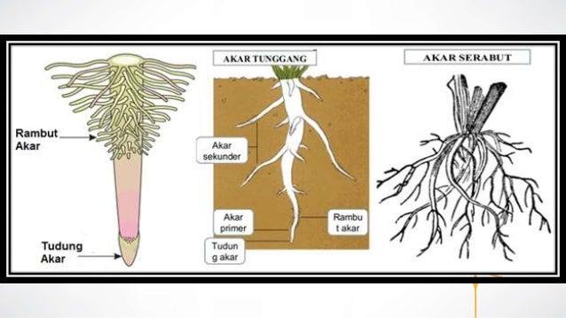 Struktur Dan Fungsi Sel Penyusun Jaringan Tumbuhan