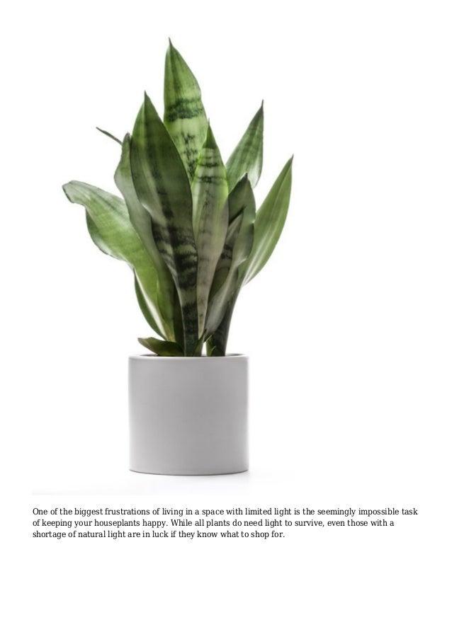 Happier Houseplants: How To Keep Indoor Plants Healthy ...