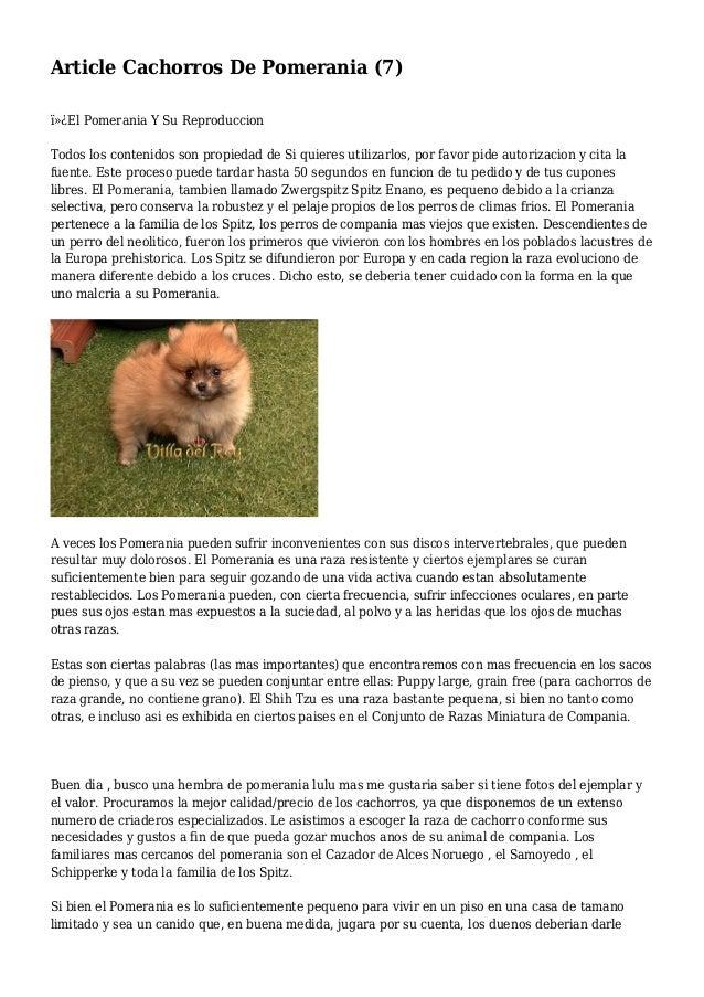 Article Cachorros De Pomerania (7) El Pomerania Y Su Reproduccion Todos los contenidos son propiedad de Si quieres util...