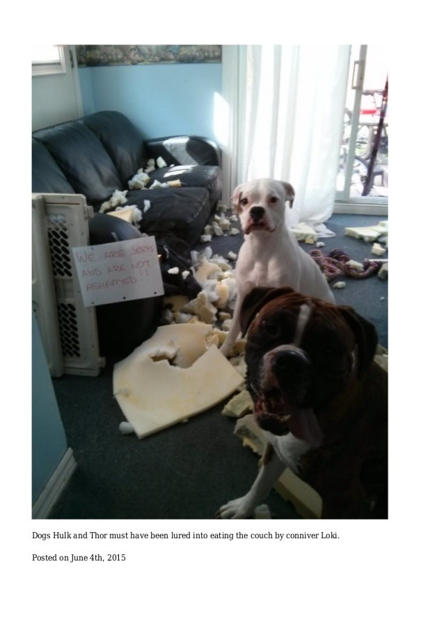 Dogs Hulk and Thor must have been lured into eating the couch by conniver Loki. Posted on June 4th, 2015