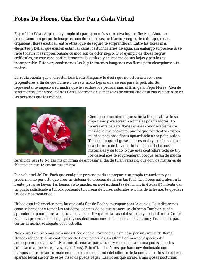 Fotos De Flores Una Flor Para Cada Virtud