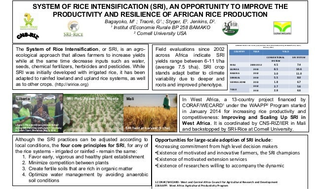 SYSTEM OF RICE INTENSIFICATION (SRI), AN OPPORTUNITY TO IMPROVE THE  PRODUCTIVITY AND RESILIENCE OF AFRICAN RICE PRODUCTIO...