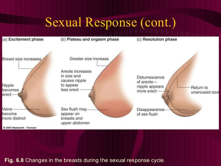What happens to breast during sex