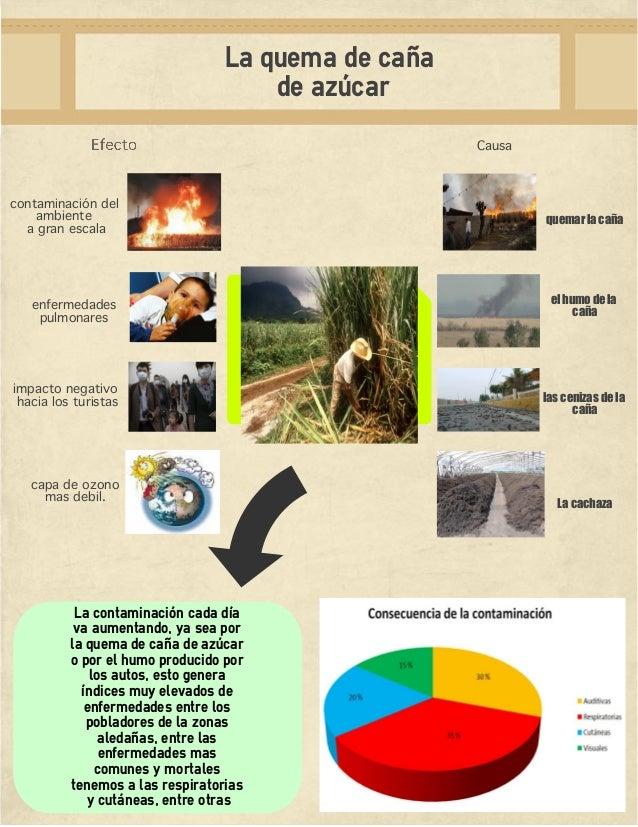 Circuito Productivo De La Caña De Azucar : La problematica de caña azucar