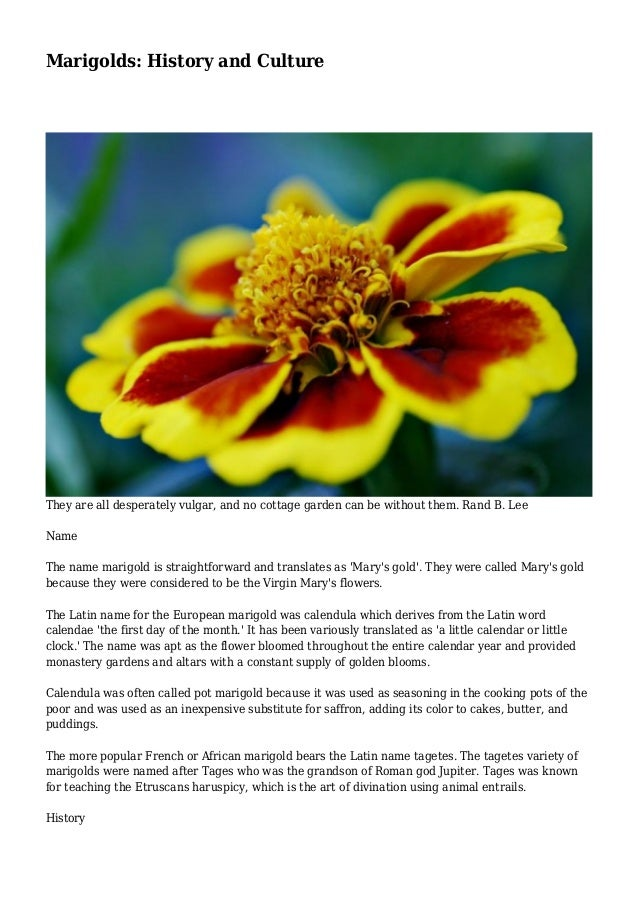 Marigolds: History and Culture They are all desperately vulgar, and no cottage garden can be without them. Rand B. Lee Nam...