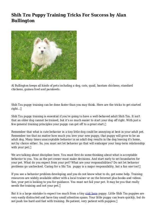 Shih Tzu Puppy Training Tricks For Success By Alan Bullington