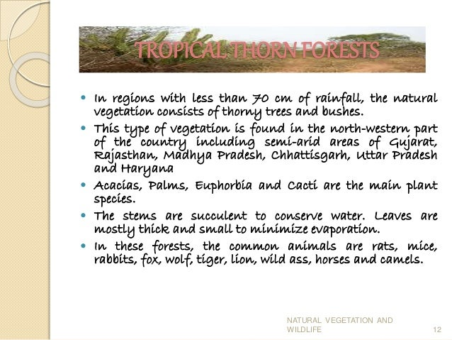 Conservation natural vegetation essay