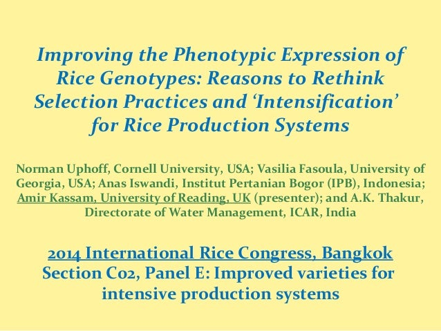 Improving the Phenotypic Expression of Rice Genotypes: Reasons to Rethink Selection Practices and 'Intensification' for Ri...