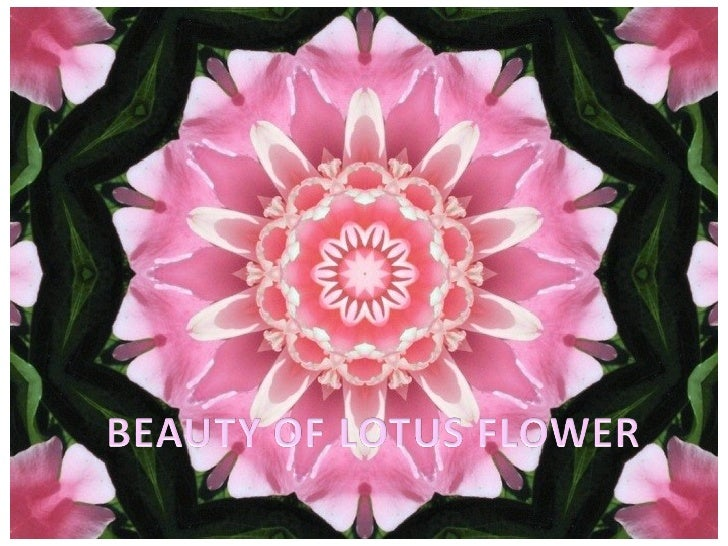 LOTUS FLOWER Author: Mary Bone Oh Lotus flower with beauty kissed by dew, Waits upon the water for its Spring debut. No ot...
