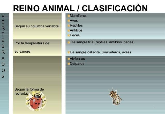 REINO ANIMAL / CLASIFICACIÓN V E R T E B R A D O S  Según su columna vertebral  Mamíferos Aves Reptiles Anfibios Peces  Po...