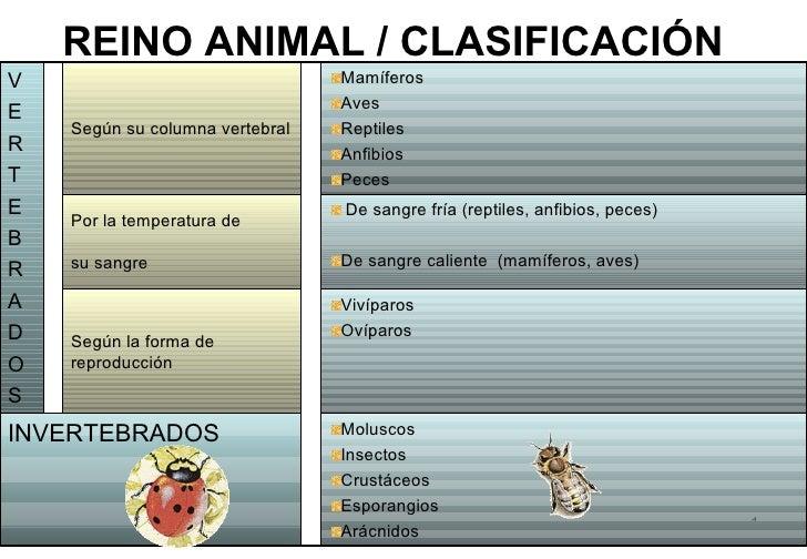 REINO ANIMAL / CLASIFICACIÓNV                                Mamíferos                                 AvesE    Según su c...