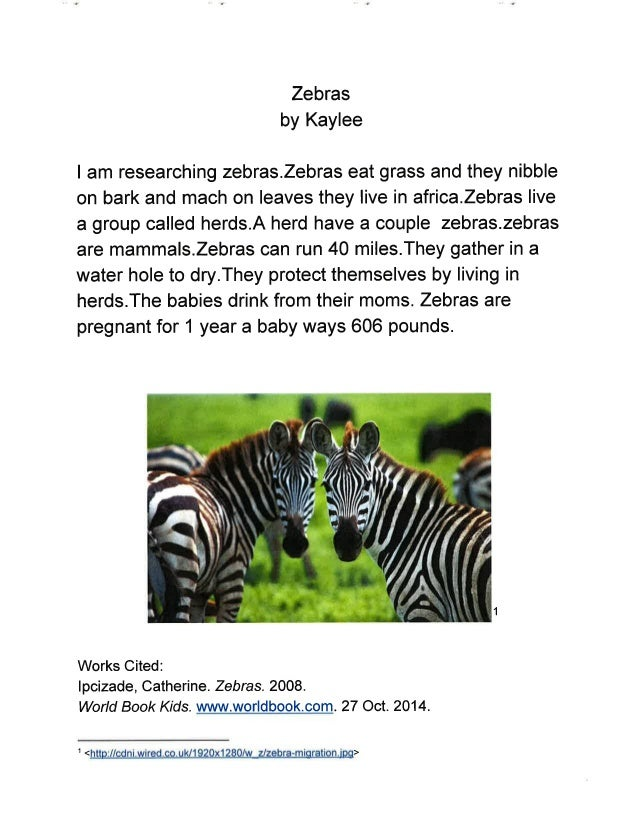 Wild Animals Research Project - Mrs  Schmoldt