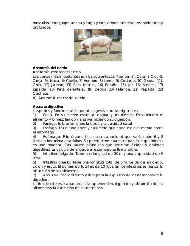 14960672 manual-de-produccion-cerdos