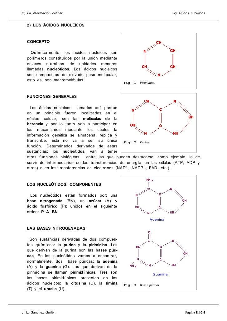 III) La información celular                                                    2) Ácidos nucleicos      2) LOS ÁCIDOS NUCL...