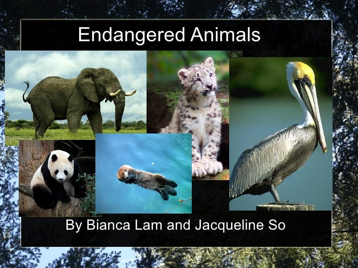 Endangered Animals By Bianca Lam and Jacqueline So