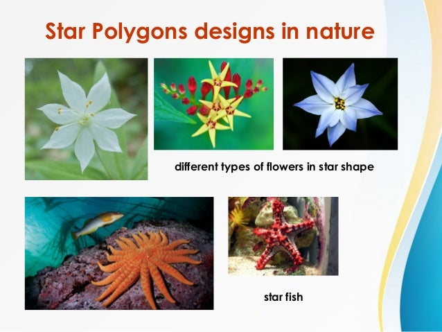 Regular Polygons In Nature Star Polygons -...