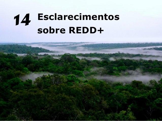 Esclarecimentossobre REDD+14
