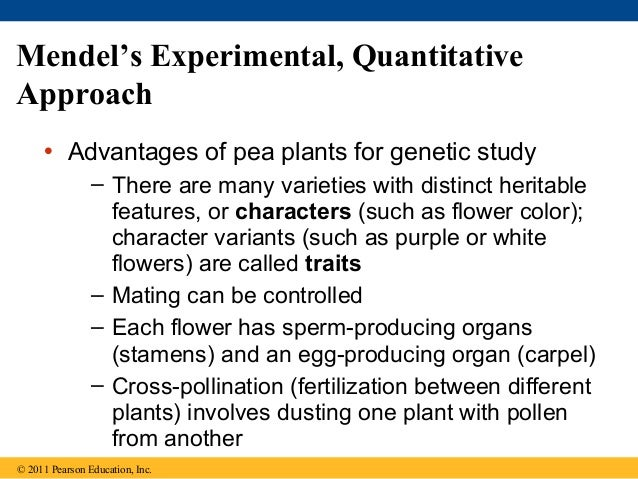 mendels approach Mendel's approach to answering scientific questions differed from that of his contemporaries because he was able to study scientific questions so that he would not.