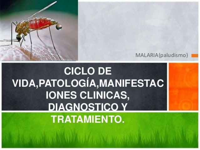 MALARIA(paludismo)  CICLO DE VIDA,PATOLOGÍA,MANIFESTAC IONES CLINICAS, DIAGNOSTICO Y TRATAMIENTO.