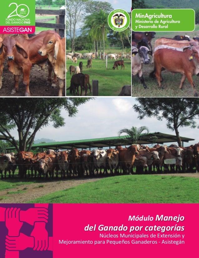 Modulo manejo de ganado por categorias  1  Módulo  Manejo  del  Ganado  por  categorías  Núcleos  Municipales  de  Extensi...