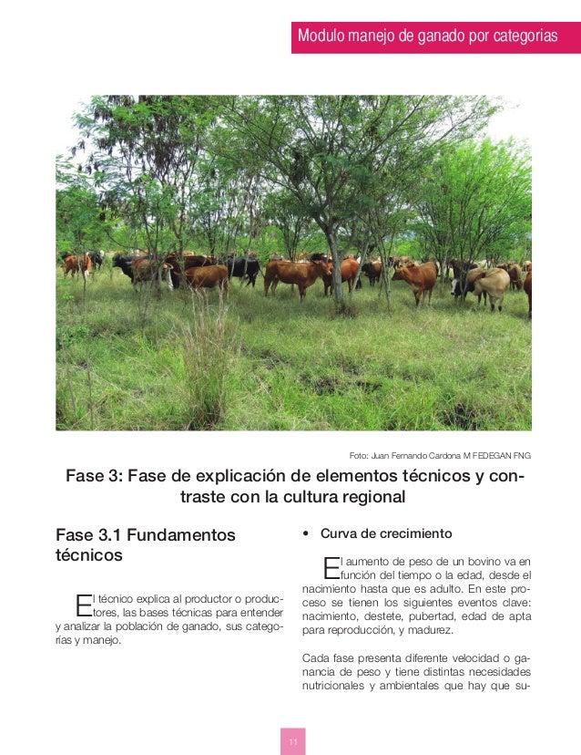 Modulo manejo de ganado por categorias  11  Foto: Juan Fernando Cardona M FEDEGAN FNG  Fase 3: Fase de explicación de elem...