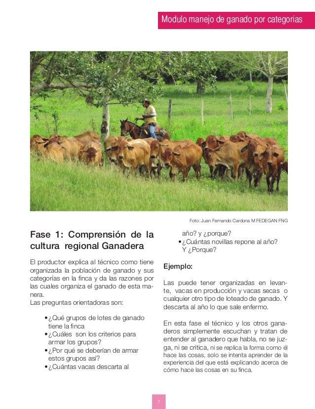 Modulo manejo de ganado por categorias  7  Foto: Juan Fernando Cardona M FEDEGAN FNG  Fase 1: Comprensión de la  cultura r...