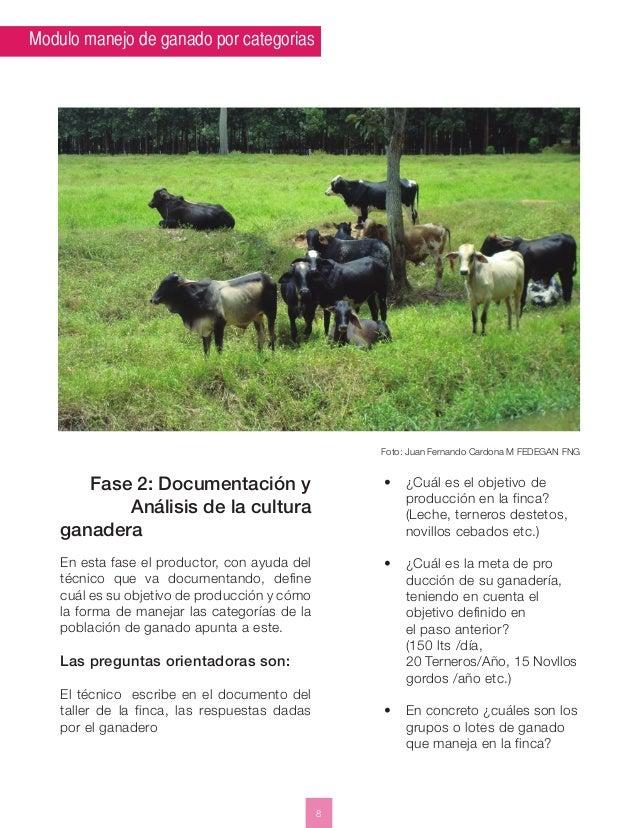 Modulo manejo de ganado por categorias  8  Foto: Juan Fernando Cardona M FEDEGAN FNG  Fase 2: Documentación y  Análisis de...