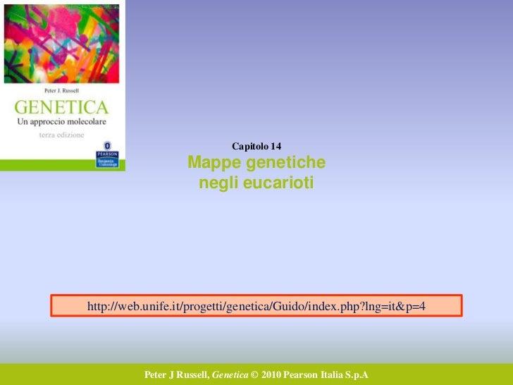 Capitolo 14                    Mappe genetiche                     negli eucariotihttp://web.unife.it/progetti/genetica/Gu...