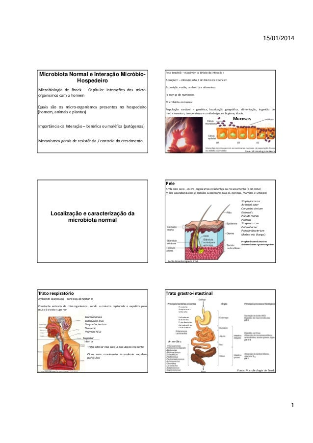 15/01/2014  Microbiota Normal e Interação MicróbioHospedeiro Microbiologia de Brock – Capítulo: Interações dos microorgani...