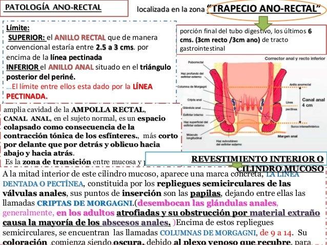 """localizada en la zona """"TRAPECIO ANO-RECTAL""""PATOLOGÍA ANO-RECTAL porción final del tubo digestivo, los últimos 6 cms. (3cm ..."""
