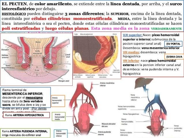 14 patologia  ano rectal Slide 2