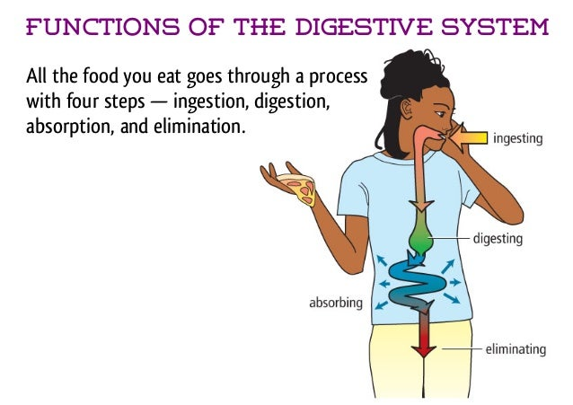 a description of the step by step process of digesting food inside the digestive system The digestive system acts in stages to digest our food each stage is important   swallowing - swallowing may seem like a simple process to us it just sort of.