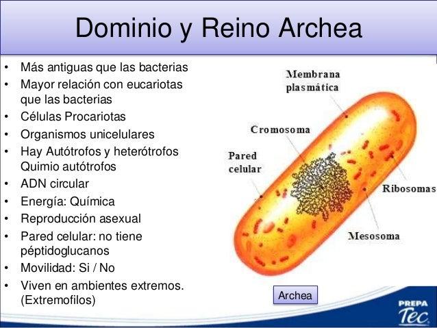 Dominio bacteria reproduccion asexual
